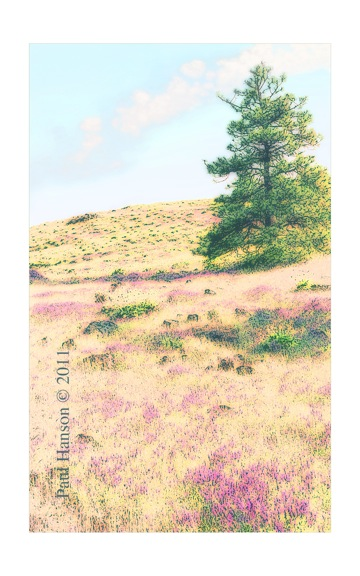 Digital art print of a photo of wildflowers and a pine tree that has been manipulated to give it a lithographic look.  Printed on archival, high quality paper.